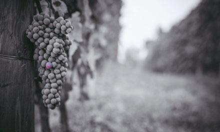Un acino escluso dal vino
